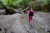 schmitz preserve park, hikes for kids, seattle hiking, nature play,