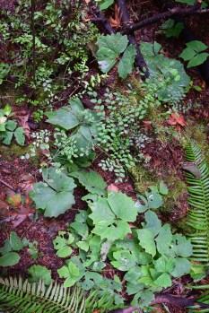 schmitz preserve park, hikes for kids, urban hiking, native plants