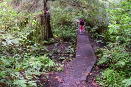 schmitz preserve park, best hikes for kids, urban trails