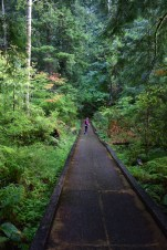 redmond watershed preserve, kids in nature, best hikes for kids,