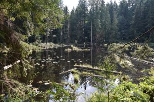 redmond watershed preserve, tree frog trail, hikes for kids,