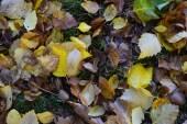 carkeek park, hikes for kids, fall, autumn, nature