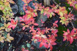 best hikes for kids, fall colors, north cascades, red and yellow leaves