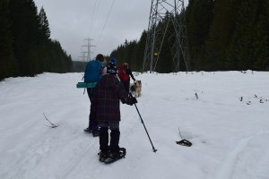 winter snowshoe with kids, hiking with children, snoqualmie pass, hikes with dogs