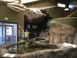 SEA Discovery Center, Poulsbo aquarium, touch tank, marine life, puget sound, free kids activities