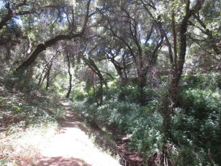 San Juan Loop Trail IMG_5364