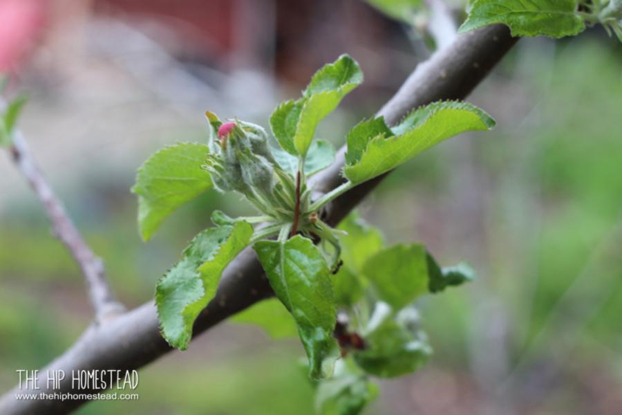 5 Garden Care Tip for a Beautiful Garden The Hip Homestead
