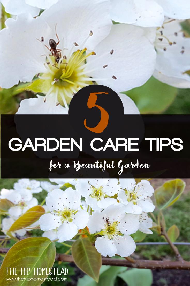 5 Garden Care Tips for a Beautiful Garden - The Hip Homestead