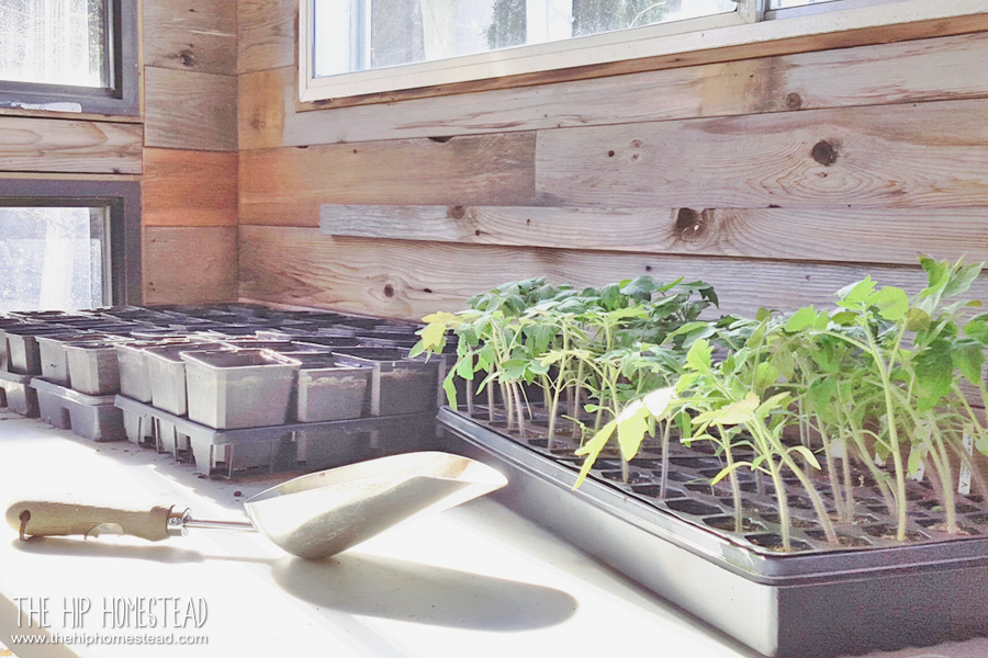 Tips and tricks for starting seeds indoors - The Hip Homestead