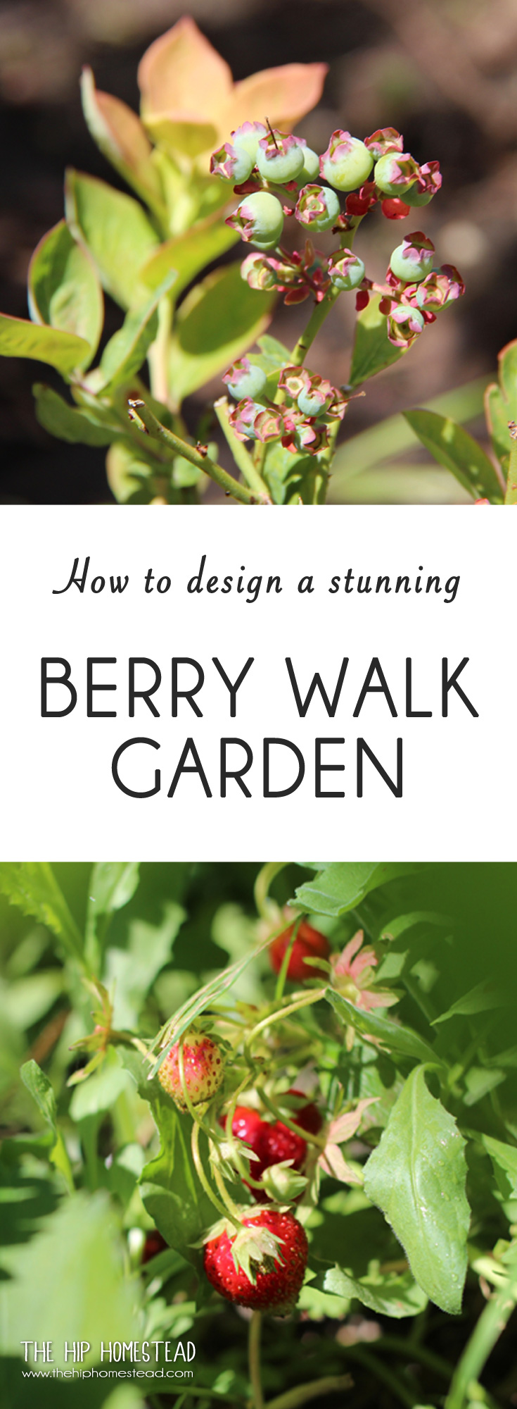 to design and plant a stunning berry walk garden the hip homestead