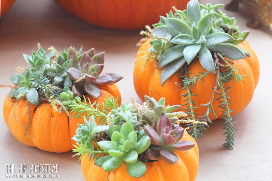 How to Make Mini Succulent Pumpkin Planters - The Hip Homestead