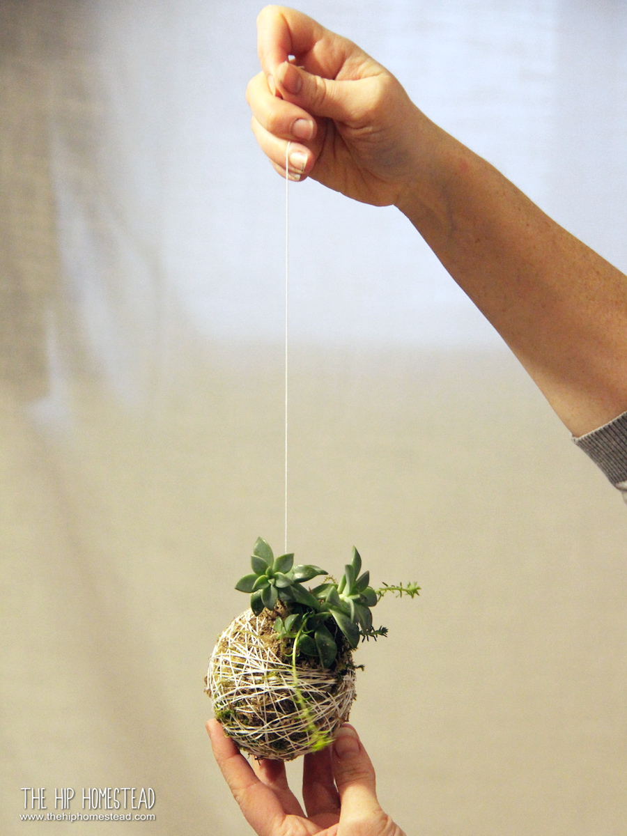 How to Make a Hanging Succulent Garden - The Hip Homestead