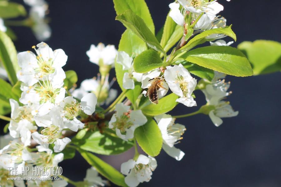 15 Super Easy Tasks For Your Spring Garden Checklist The Hip