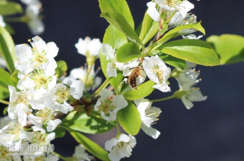 Super Easy Spring Gardening Check List - The Hip Homestead