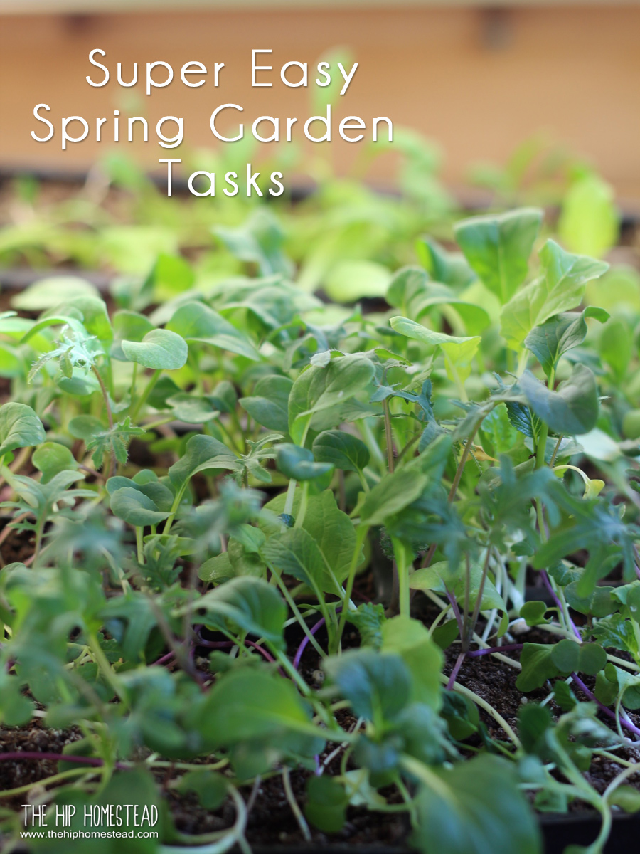 Super Easy Spring Gardening Check List - The Hip Homestead