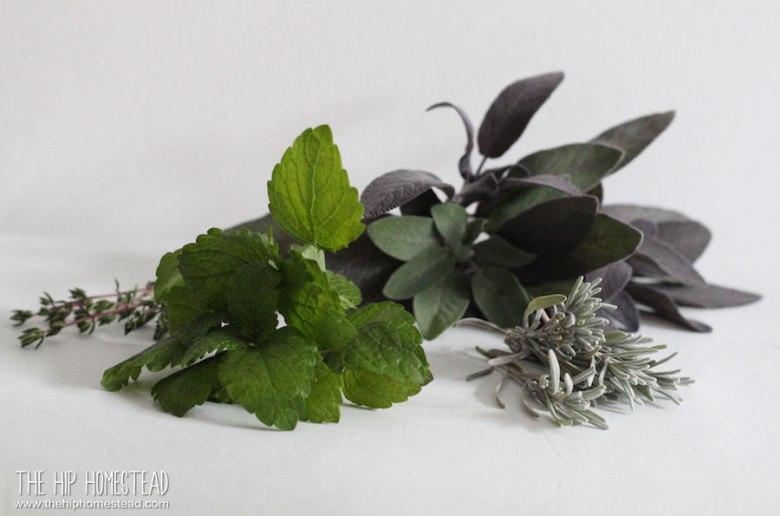 Perennial Herbs