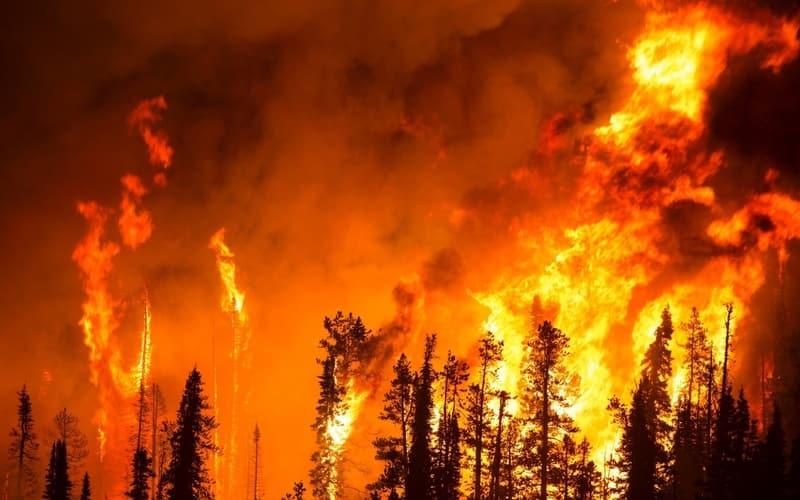 thp-bushfire-in-australia-cover