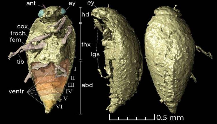 New Beetle Species