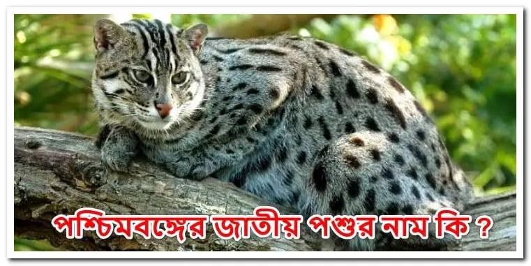 পশ্চিমবঙ্গের জাতীয় পশুর নাম বাঘরোল বা মেছো বিড়াল