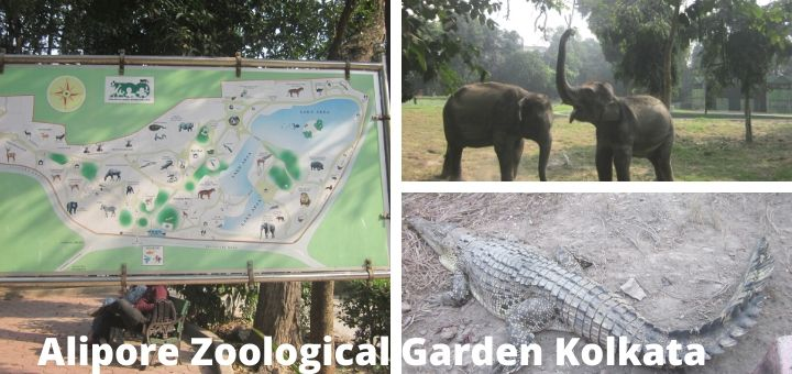Alipore zoological garden Kolkata | Chiriakhana entry, timings, animals