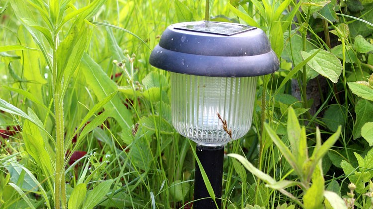 How to Clean Solar Lights