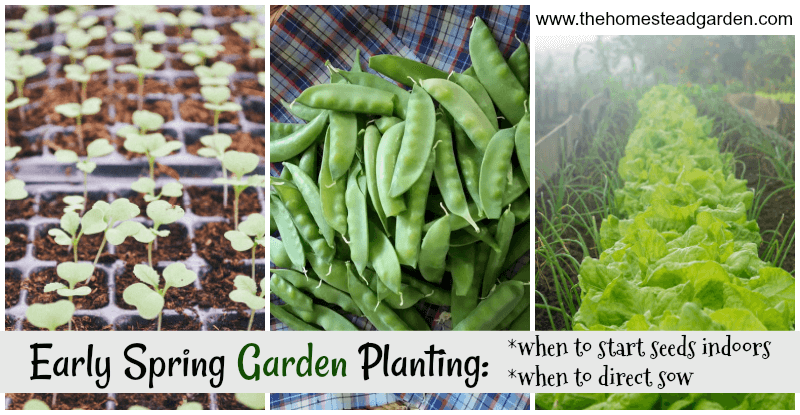 Early Spring Garden Planning: when to direct sow, when to start seeds indoors, and includes information on both fruits and vegetables