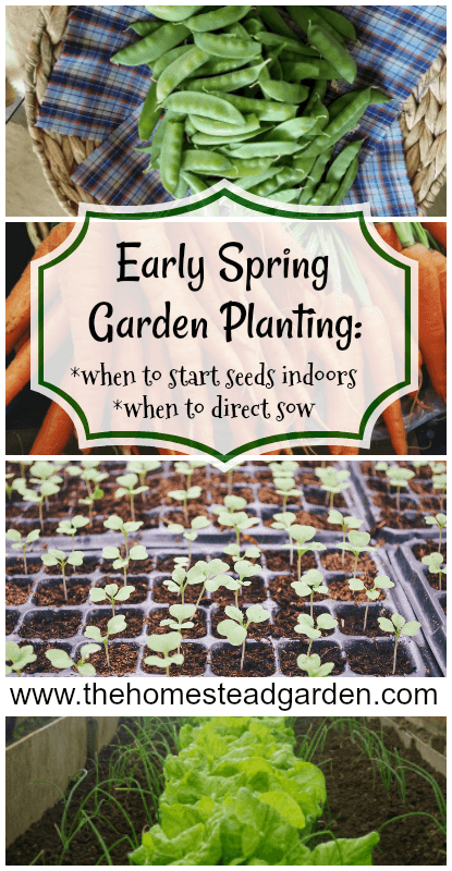 Early Spring Garden Planning (including when to start seeds indoors and when to direct sow)