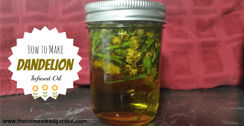 How to Make Dandelion Infused Oil