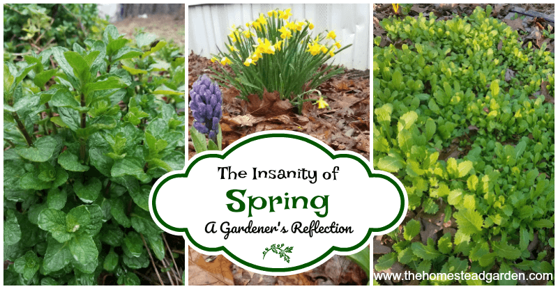 The Insanity of Spring: A Gardener's Reflection