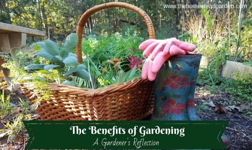 The Benefits of Gardening: A Gardener's Reflection