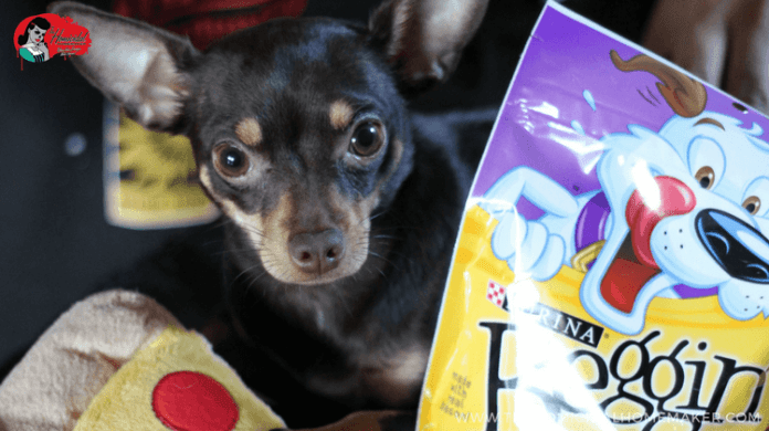 BB's First Birthday (A Dog Birthday Party!) | The Homicidal Homemaker