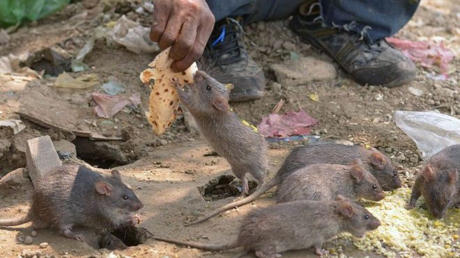 Lassa fever: Govt evacuates dump site