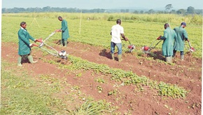 Farm settlements fees: ODSG to arrest defaulters
