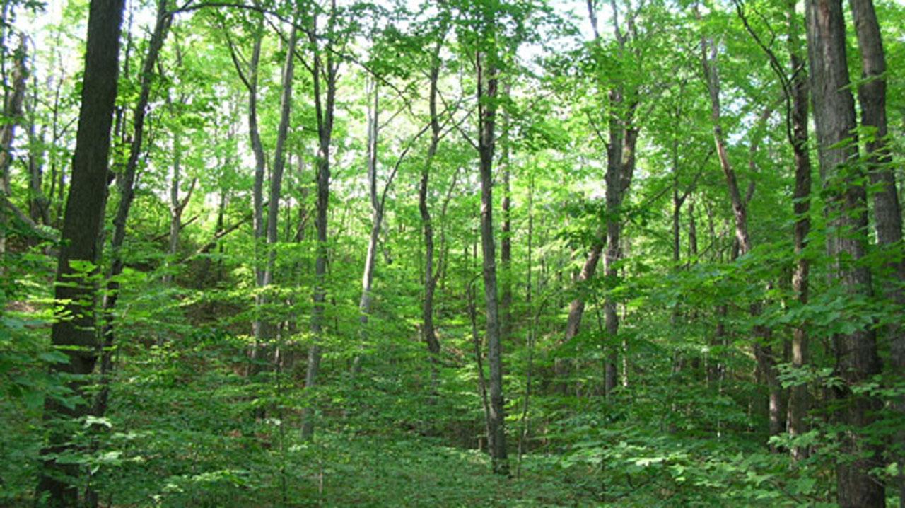 REDD+ partners CSDevNet on forest preservation