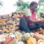 AAUA partners CBN on cocoa production, targets 10,000 jobs