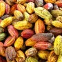 ODSG partner  FSP,IMS on  cocoa production