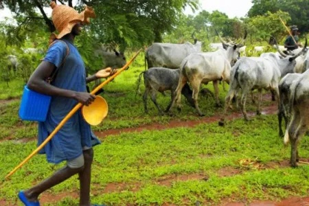Farmers cry  out over herdsmen's attacks
