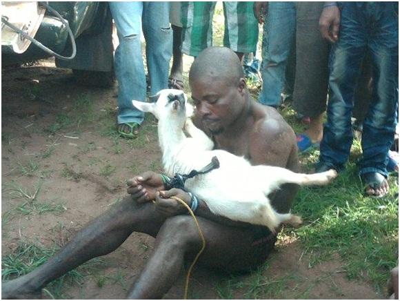 'Okada man' docked for stealing goats