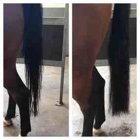 paarden-extensions-paardenextensions-the-horse-extensions-factory