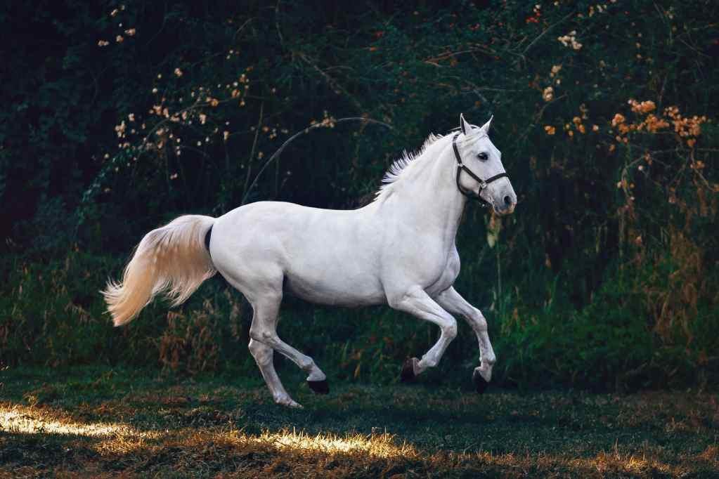 paarden-extensions-verzorging
