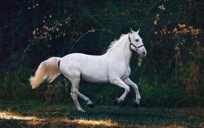 Paarden extensions verzorgings tips