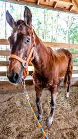 Older horse care