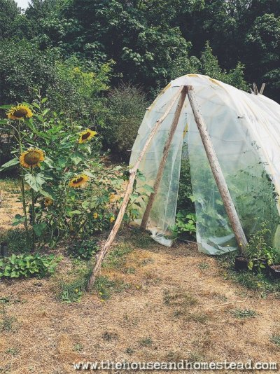 Find out how to apply the principles of permaculture to your own garden, homestead and life. Learn the ethics and design principles behind permaculture design and see how you can benefit from permaculture in your own backyard.