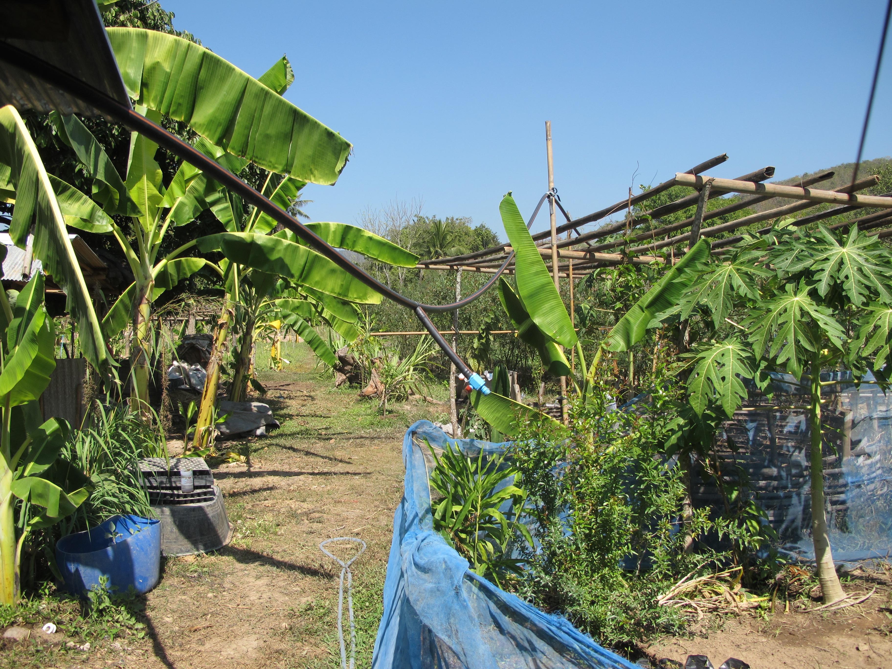 PRAD Farm 12