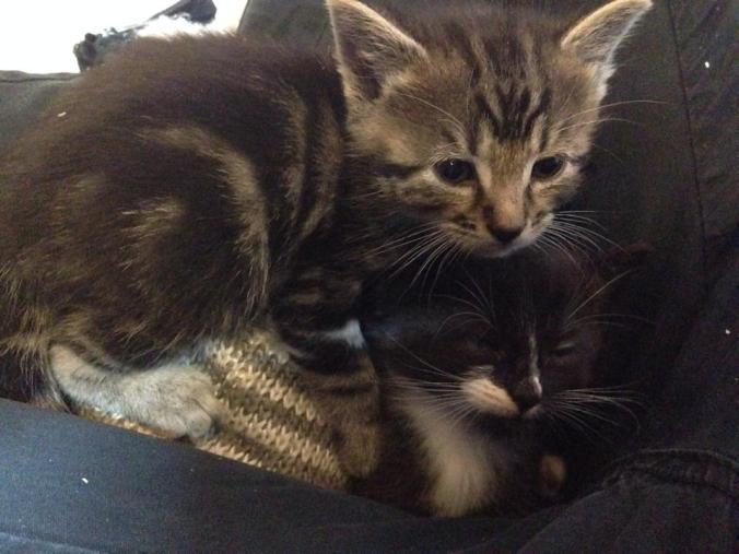 kitten-cuddles