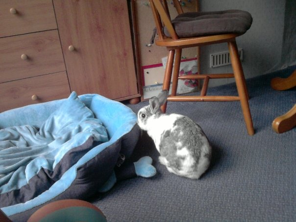 rabbit-proofing-your-house