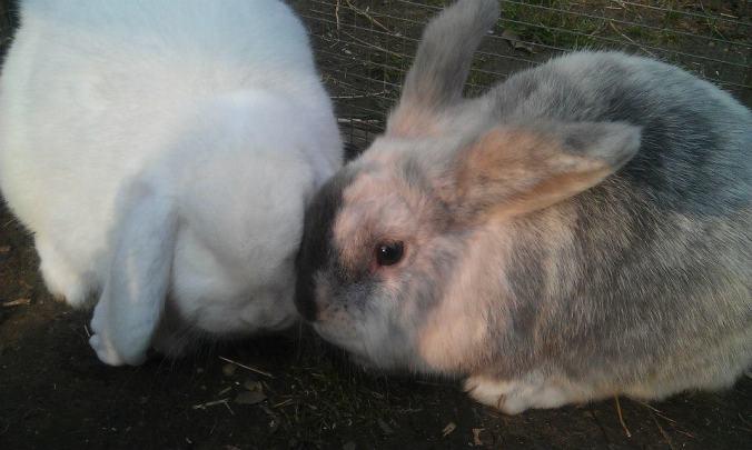rabbits-need-company
