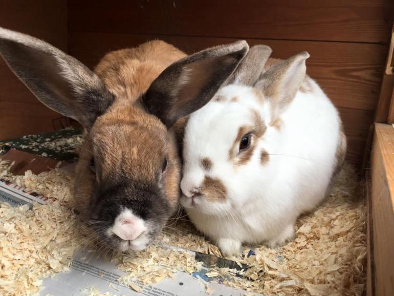 rabbits-need-rabbit-company