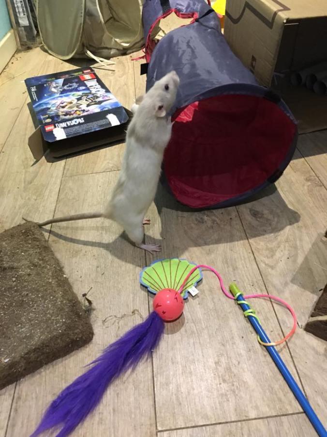 rat-play