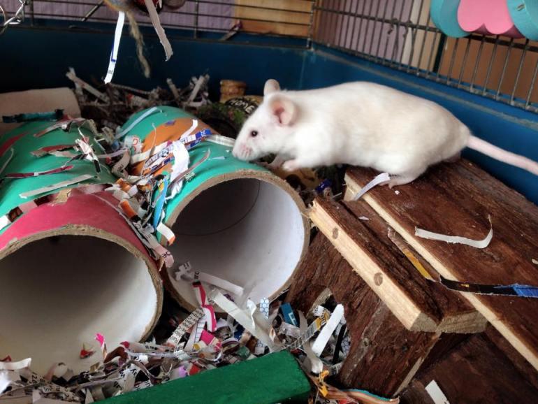 mice-playing